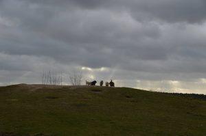Cairn Terrier op heuvel