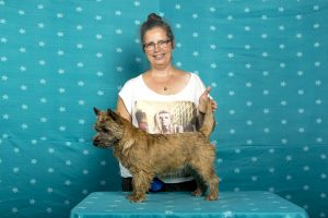 Ryshka van 't Goln Hammerk (Cairn Terrier)