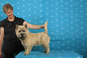Splinterhill's Eye Catcher (Cairn Terrier)