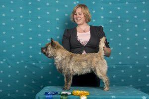 Jump for Joy's Fairytale (Cairn Terrier)